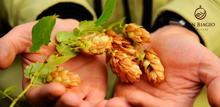 birra biologica luppolo