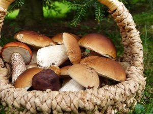 polenta salsiccia e funghi